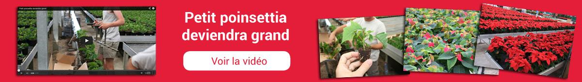 slide-vidéo