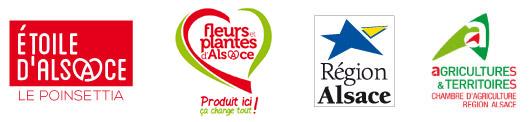 Etoile d'alsace, Fleurs et plantes d'Alsace, Région Alsace, Agricultures et territoires
